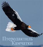 Смотреть вырезку из NatGeoRus 03.2011 - Птеродактиль Камчатки