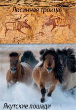 Смотреть вырезку из NatGeo 2011.05. Лосиная троица и Якутские лошади