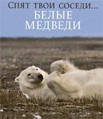 Смотреть вырезку из GEO 01.2012. Спят твои соседи... Белые медведи