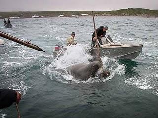Чукотка охота на китов
