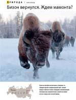 Смотреть вырезку из NatGeoRus 02.2011. Бизон вернулся. Ждем мамонта?
